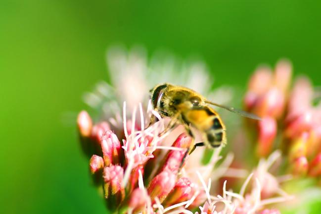 Comment protéger les abeilles ?