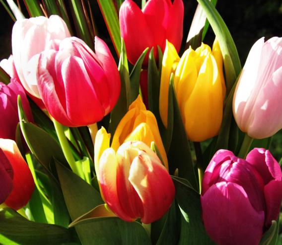 Fleurir Son Jardin