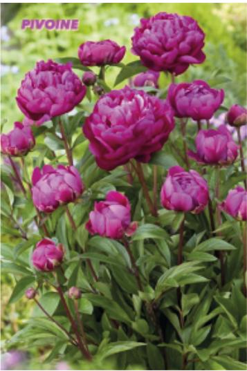 [Amenagement extérieur] Avec Nature&Paysage, optez pour un jardin épatant au Printemps !