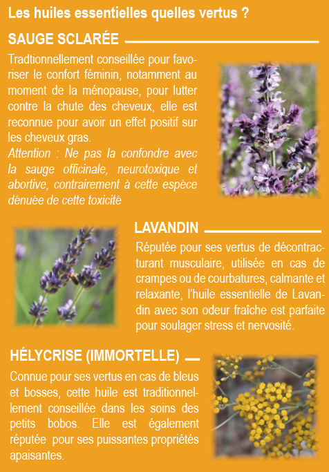 """[Produits Locaux] Entre Valensole et Puimoisson  - Le lavandin : une histoire de famille pour """"La Maison Angelvin"""""""